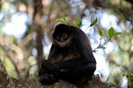 Monkey-sanctuary-09