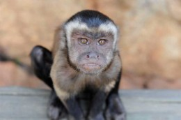 Monkey-sanctuary-11