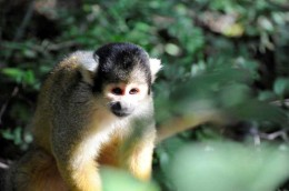 Monkey-sanctuary-17