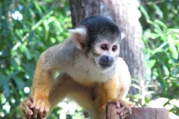 Monkey-sanctuary-23