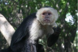 Monkey-sanctuary-38