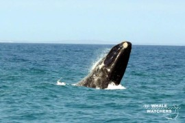 whale_watching01