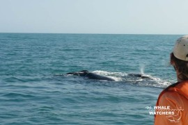 whale_watching02