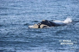 whale_watching021