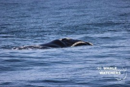 whale_watching022