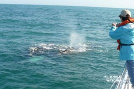 whale_watching02b