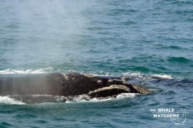 whale_watching03