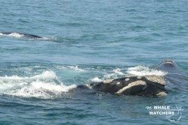 whale_watching09