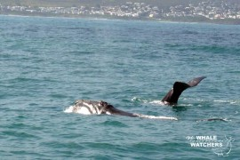 whale_watching10
