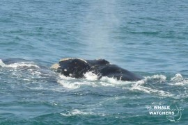 whale_watching11