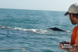 whale_watching14