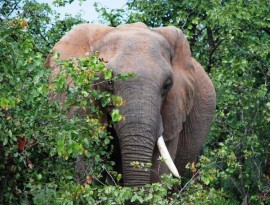 Plett-Elephant-sanctuary-1a