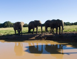 Plett-Elephant-sanctuary-6