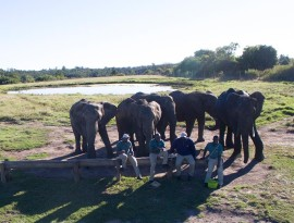 Plett-Elephant-sanctuary-7