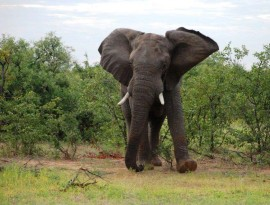 Plett-Elephant-sanctuary-8