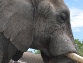 hazyview-elephant-sanctuary-10