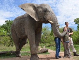hazyview-elephant-sanctuary-3