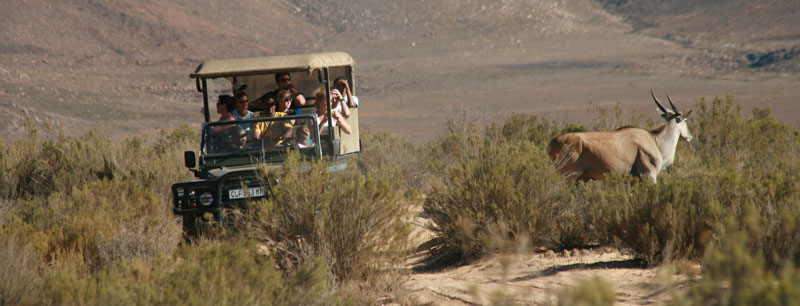 Game Drive4