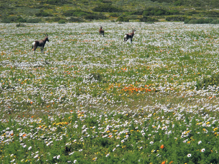 Wildflower season The Farmhouse is on our Wildflower accommodation list