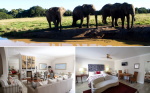 Elephant Country Guesthouse