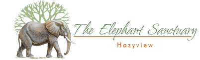Experience an amazing day at the Hazyview Elephant Sanctuary in South Africa