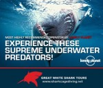 Shark Cage Diving in South Africa with Great White Shark Tours