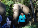 Welcome to the Elephant Sanctuary in Plettenberg Bay – an elephant experience for life