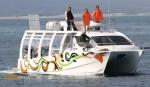 Hermanus Whale Watchers