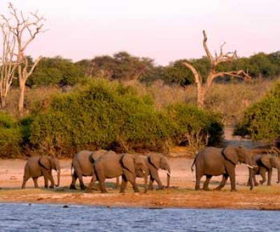 Why Botswana needs to be on your travel bucket list