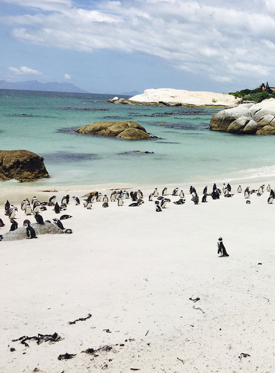 The 8 best beaches South Africa that is well worth a visit