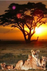 Africa is still the number one choice of millions as a safari destination