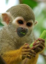 Visit the Bush Baby and Monkey Sanctuary in Hartbeespoort Dam